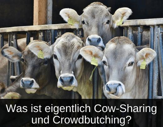 Was ist Cow-Sharing und Crowdbutching - Erklärt
